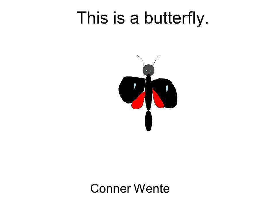 This is a butterfly. Conner Wente