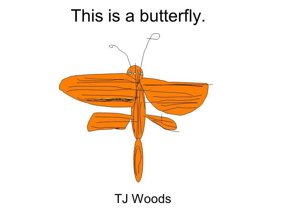 This is a butterfly. TJ Woods