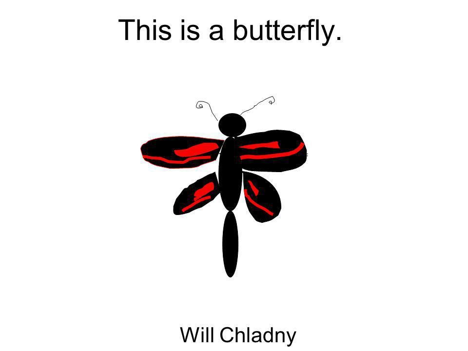 This is a butterfly. Will Chladny