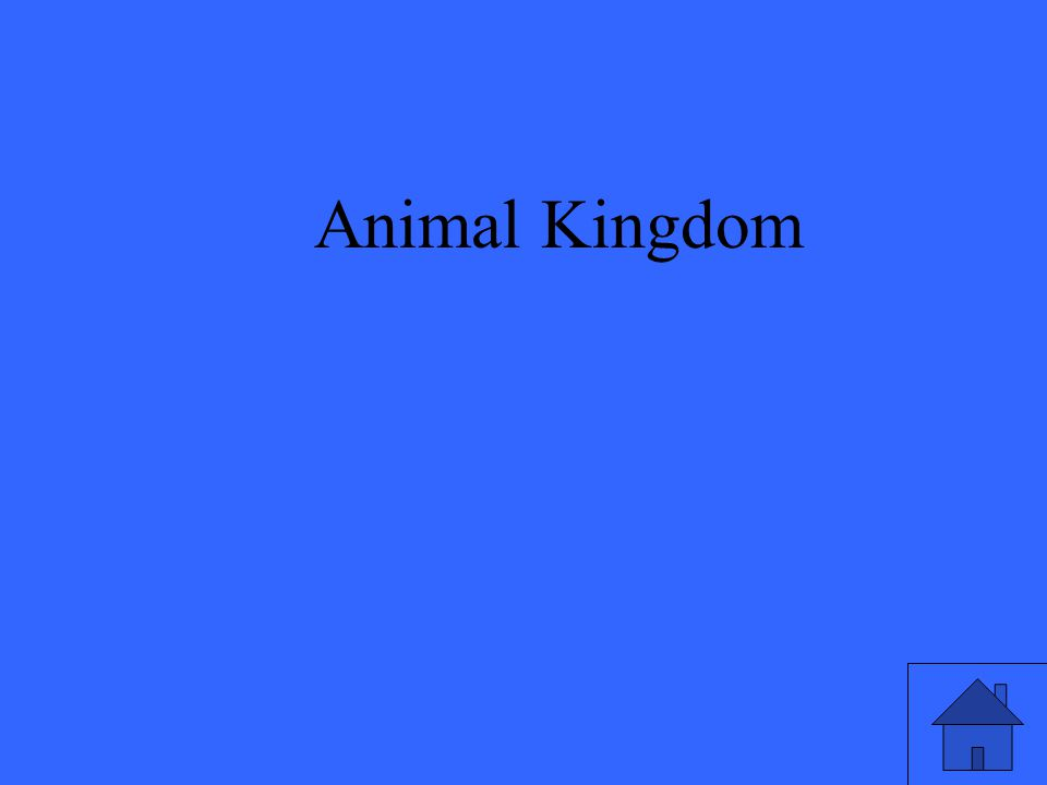 17 Animal Kingdom