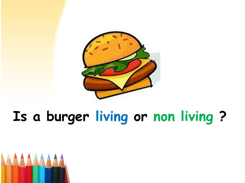 Is a burger living or non living ?