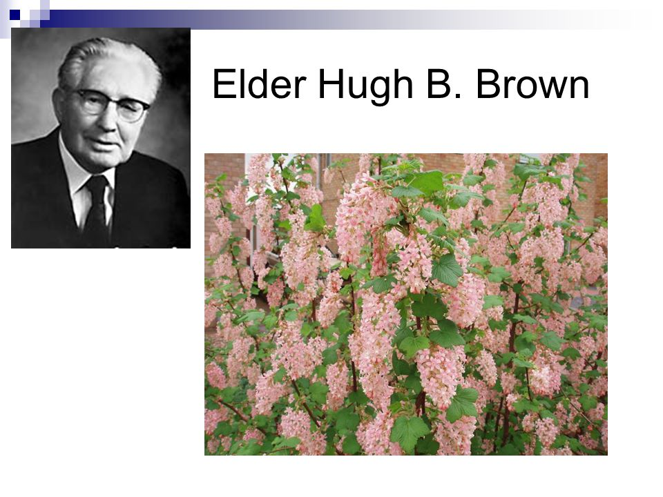 Elder Hugh B. Brown