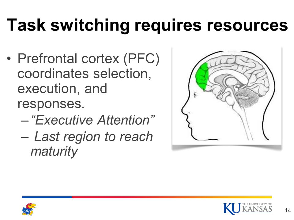 Task switching requires resources Prefrontal cortex (PFC) coordinates selection, execution, and responses.