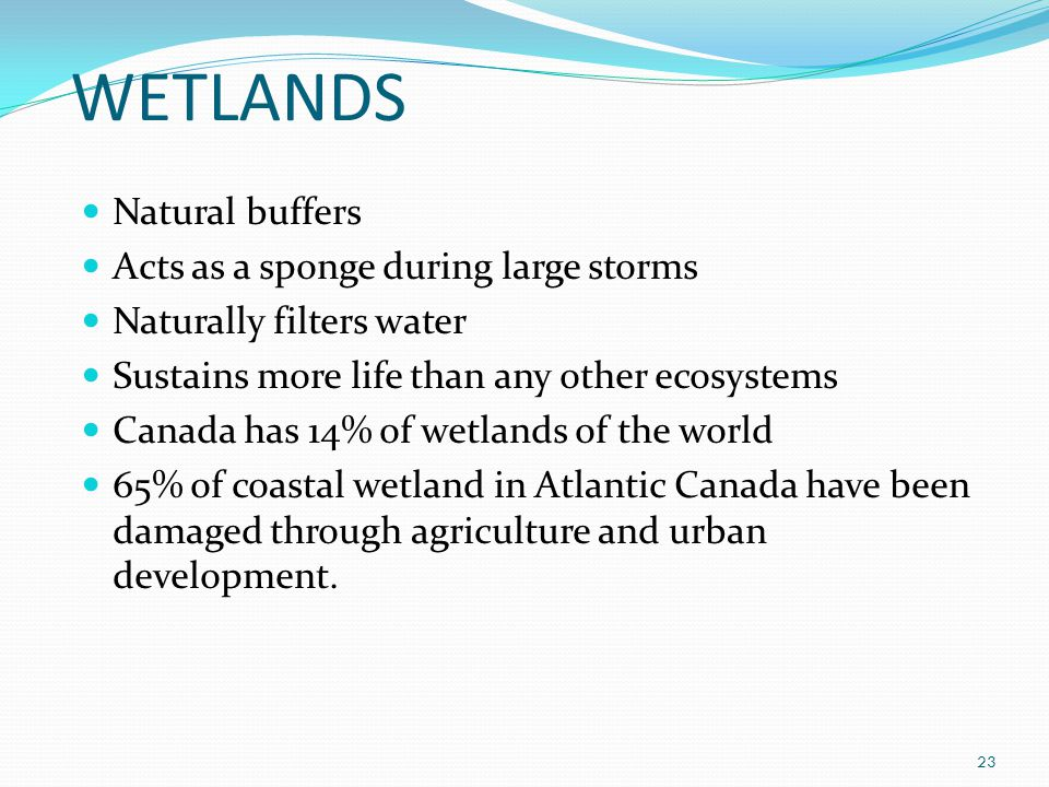 WETLANDS 23 Natural buffers Acts as a sponge during large storms Naturally filters water Sustains more life than any other ecosystems Canada has 14% of wetlands of the world 65% of coastal wetland in Atlantic Canada have been damaged through agriculture and urban development.