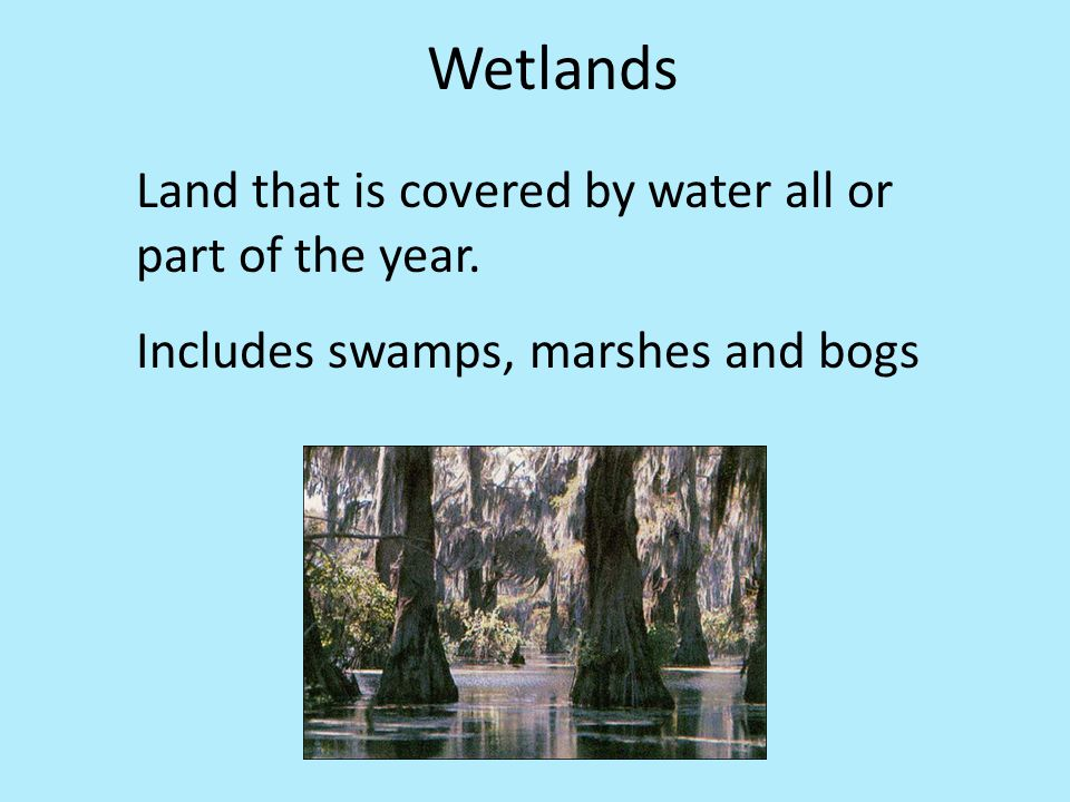adaptive features of plants and animals in marsh habitat