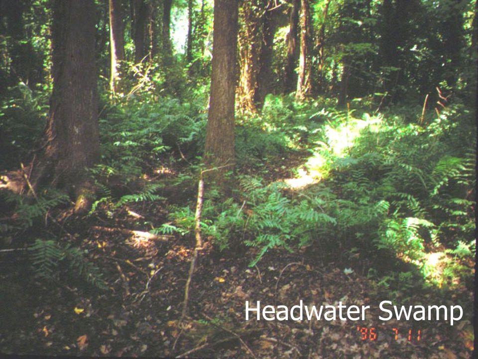 January 2002 Headwater Swamp