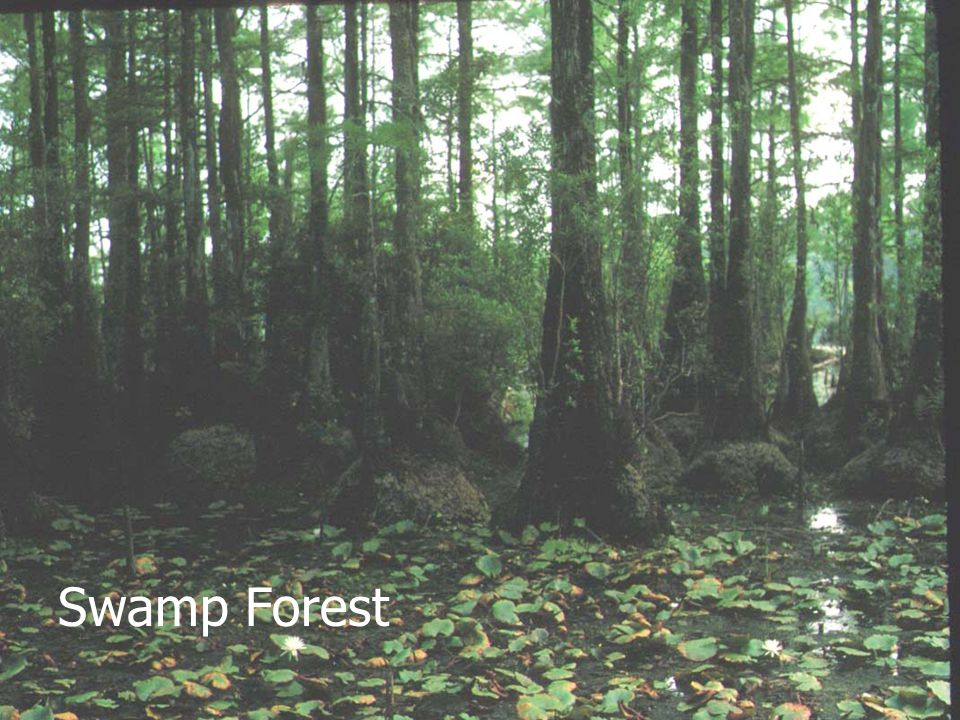 January 2002 Swamp Forest
