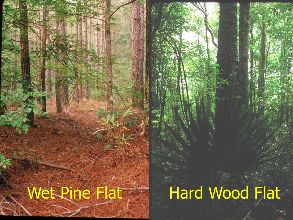 January 2002 Hard Wood FlatWet Pine Flat