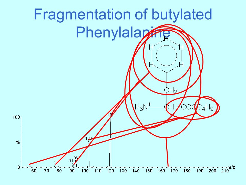 Fragmentation of butylated Phenylalanine