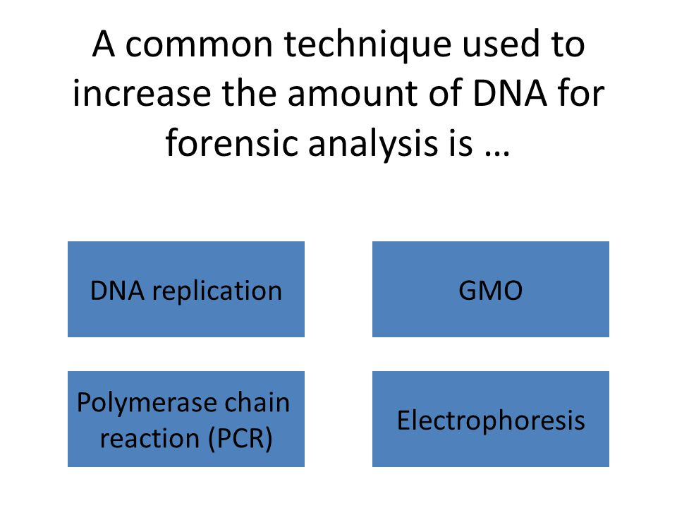 A common technique used to increase the amount of DNA for forensic analysis is … DNA replicationGMO Polymerase chain reaction (PCR) Electrophoresis