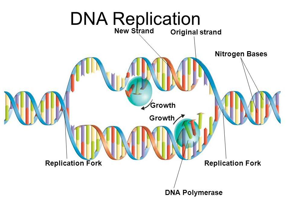 DNA  Wikipedia