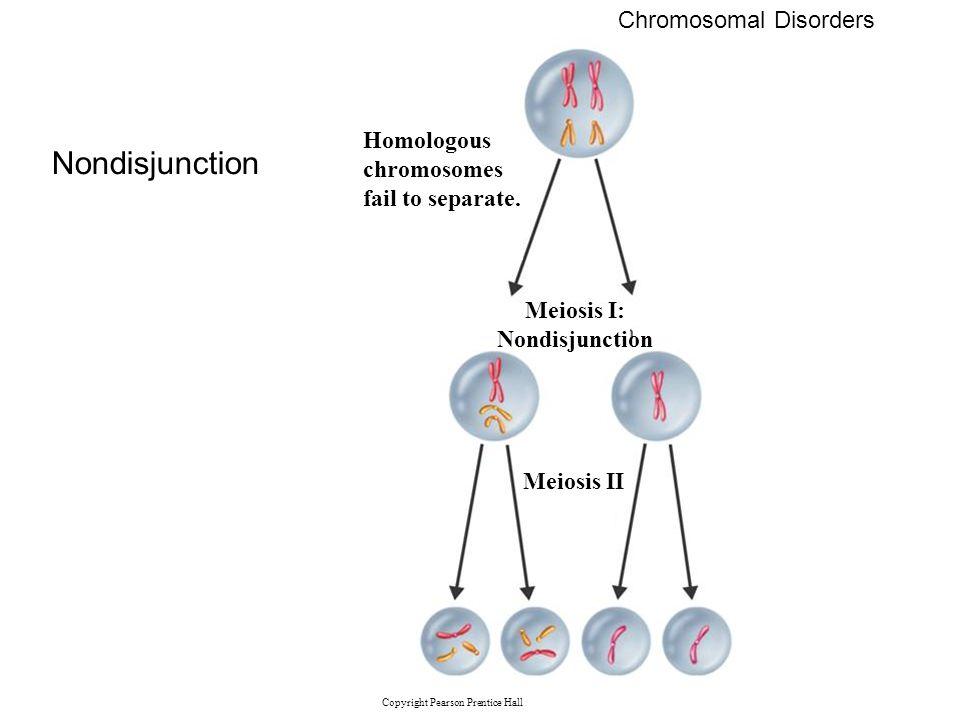 Copyright Pearson Prentice Hall Chromosomal Disorders Nondisjunction Homologous chromosomes fail to separate. Meiosis I: Nondisjunction Meiosis II
