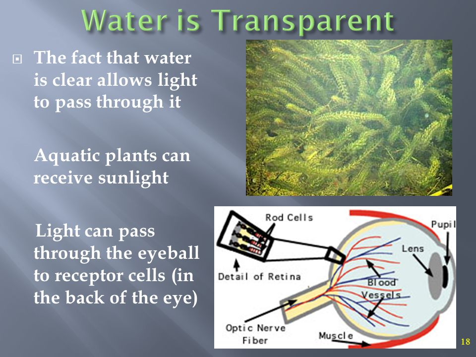 18  The fact that water is clear allows light to pass through it Aquatic plants can receive sunlight Light can pass through the eyeball to receptor cells (in the back of the eye)