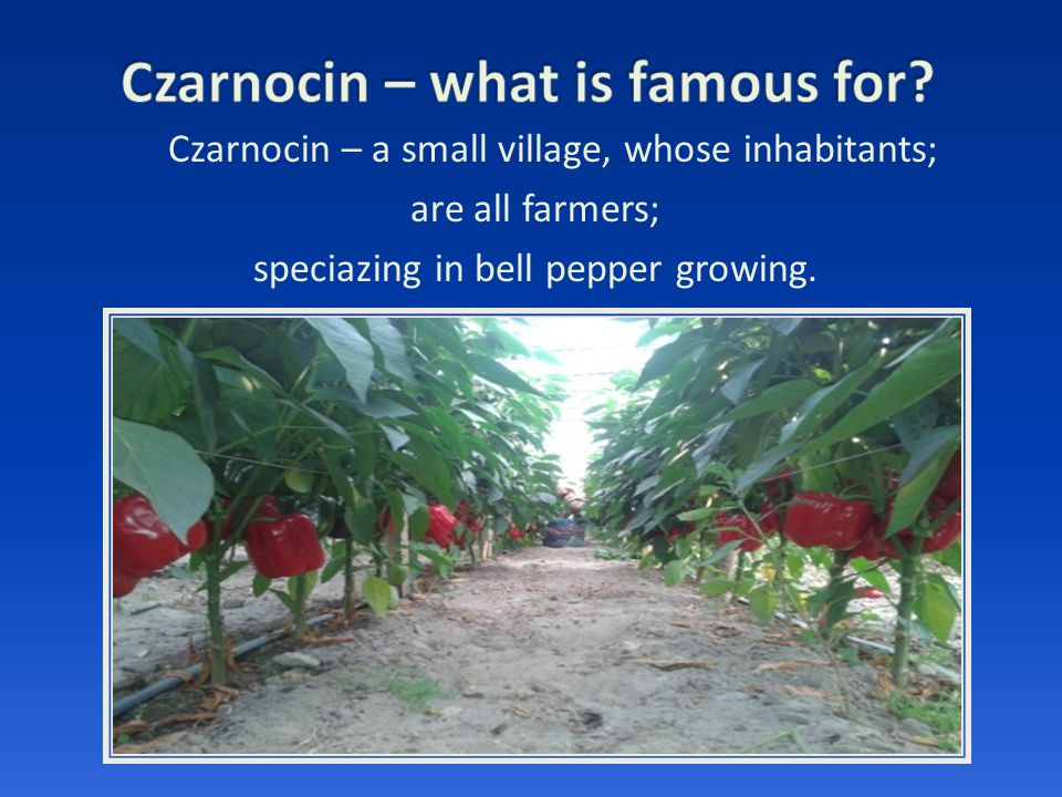 Czarnocin – a small village, whose inhabitants; are all farmers; speciazing in bell pepper growing.