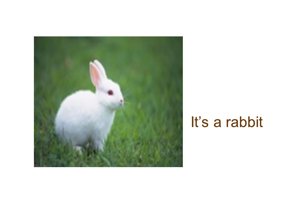 It's a rabbit
