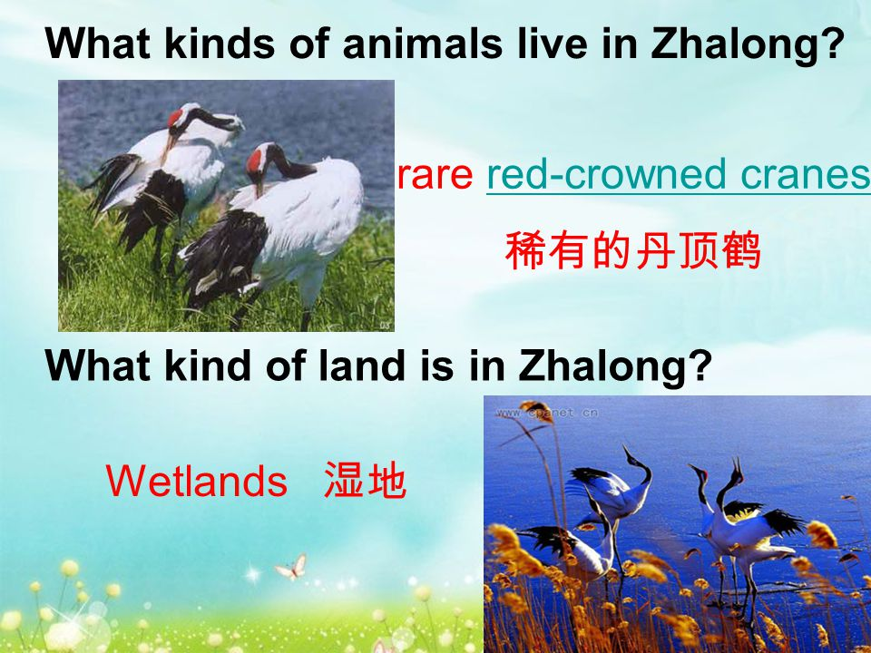 What kinds of animals live in Zhalong. What kind of land is in Zhalong.