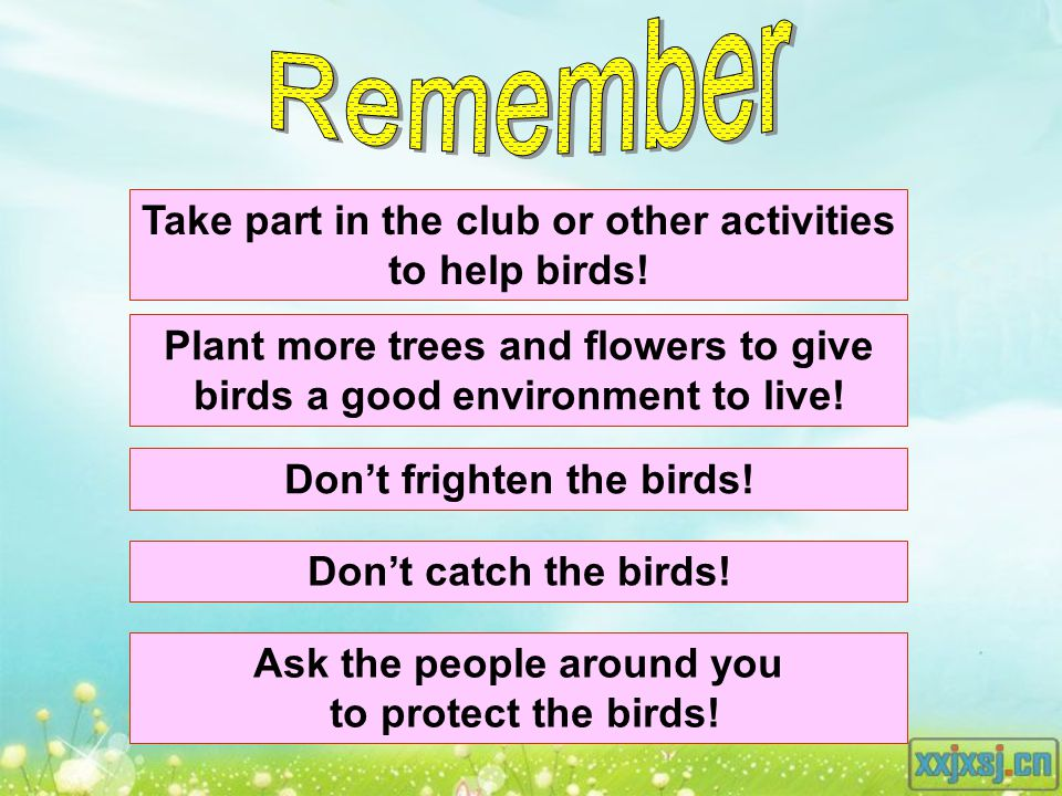 Plant more trees and flowers to give birds a good environment to live.