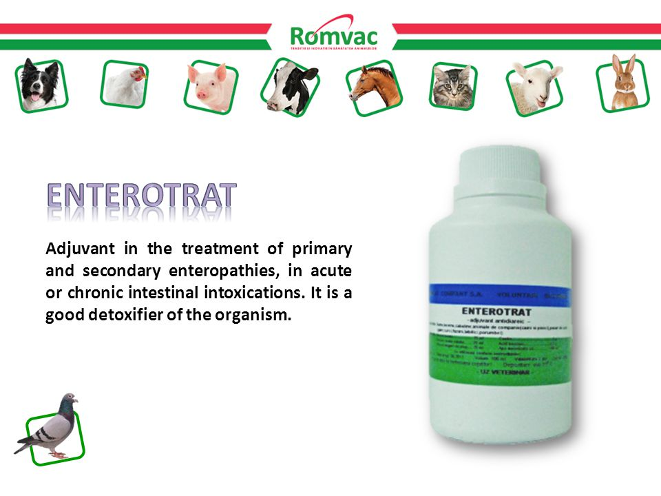 Adjuvant in the treatment of primary and secondary enteropathies, in acute or chronic intestinal intoxications.
