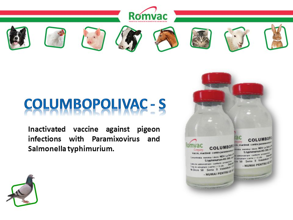 Inactivated vaccine against pigeon infections with Paramixovirus and Salmonella typhimurium.