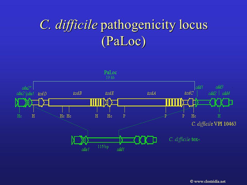 C. difficile pathogenicity locus (PaLoc) © www.clostridia.net