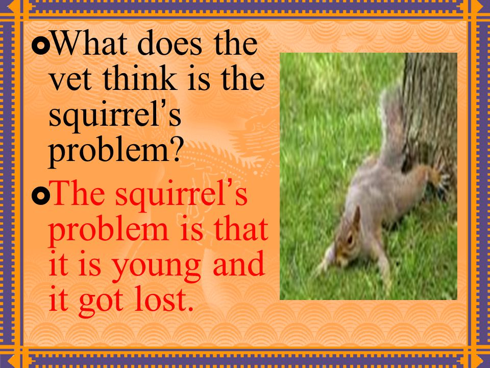  What does the vet think is the squirrel ' s problem.