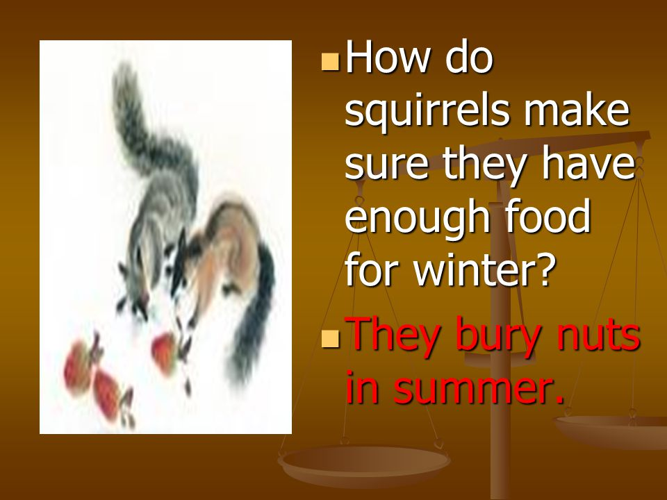 How do squirrels make sure they have enough food for winter.