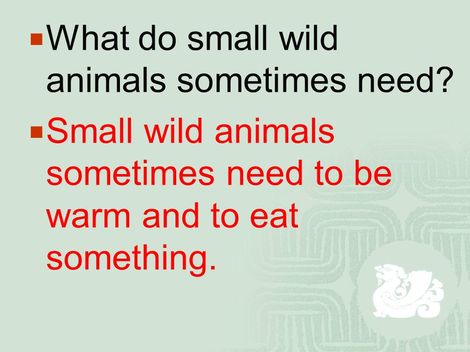  What do small wild animals sometimes need?  Small wild animals sometimes need to be warm and to eat something.