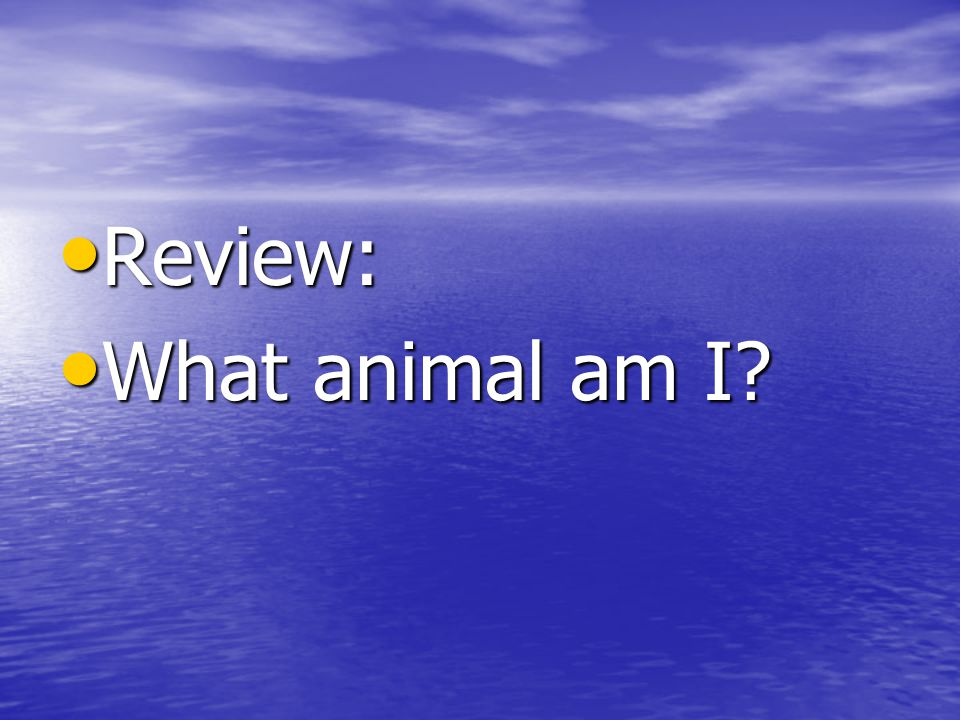 Review: Review: What animal am I What animal am I