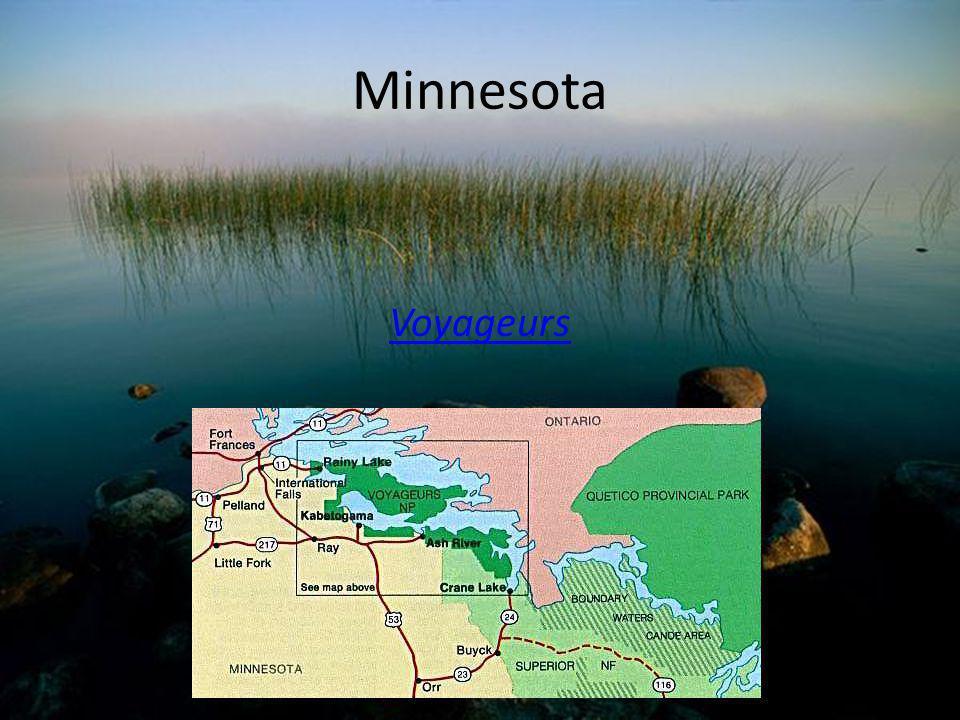 Minnesota Voyageurs