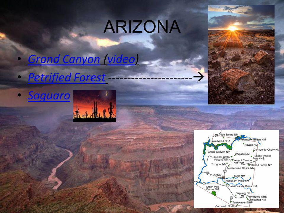 ARIZONA Grand Canyon (video) Grand Canyonvideo Petrified Forest ----------------------  Petrified Forest Saguaro