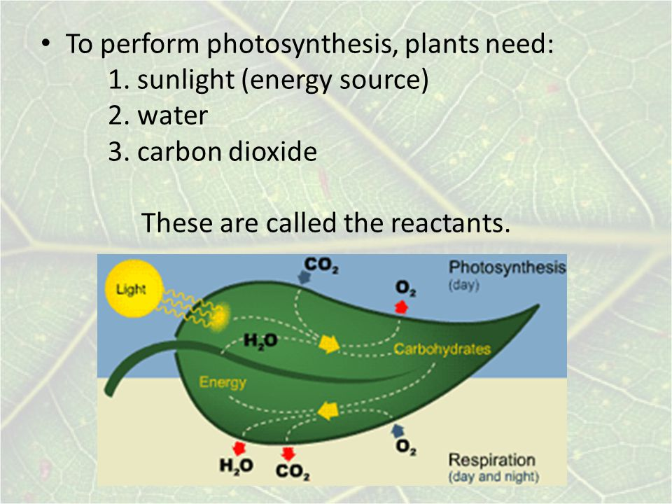 To perform photosynthesis, plants need: 1.sunlight (energy source) 2.