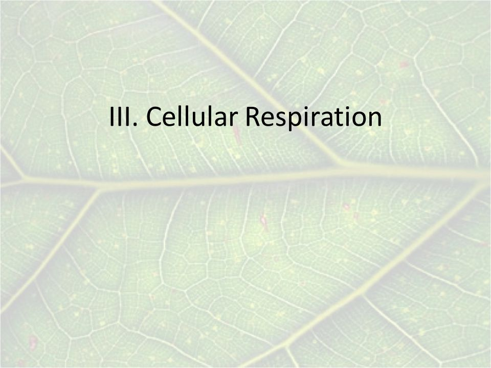 III. Cellular Respiration