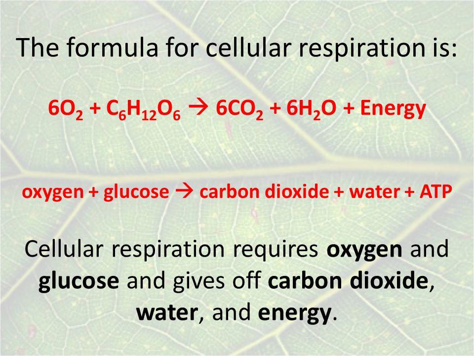 The formula for cellular respiration is: 6O 2 + C 6 H 12 O 6  6CO 2 + 6H 2 O + Energy oxygen + glucose  carbon dioxide + water + ATP Cellular respiration requires oxygen and glucose and gives off carbon dioxide, water, and energy.