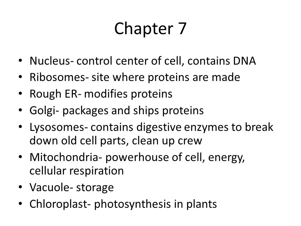 Chapter 7 Nucleus- control center of cell, contains DNA Ribosomes- site where proteins are made Rough ER- modifies proteins Golgi- packages and ships proteins Lysosomes- contains digestive enzymes to break down old cell parts, clean up crew Mitochondria- powerhouse of cell, energy, cellular respiration Vacuole- storage Chloroplast- photosynthesis in plants