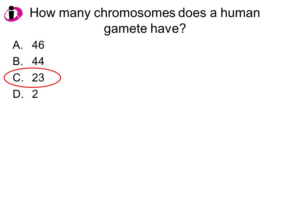 How many chromosomes does a human gamete have? A.46 B.44 C.23 D.2