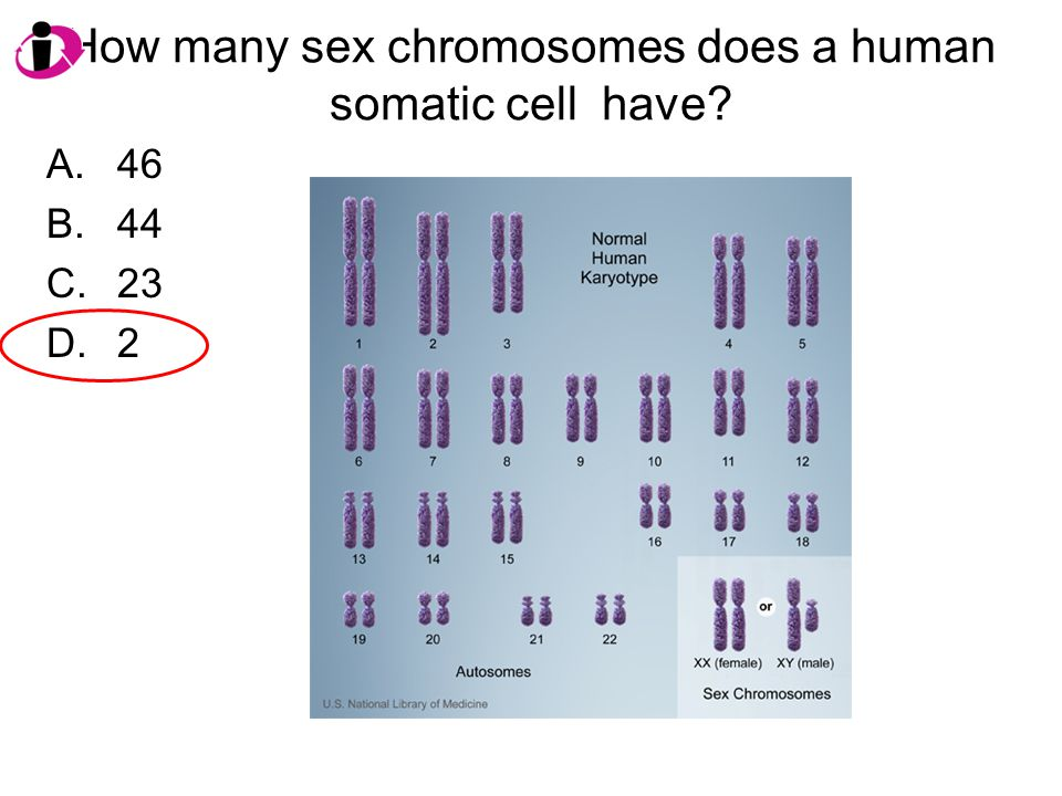 How many sex chromosomes does a human somatic cell have? A.46 B.44 C.23 D.2