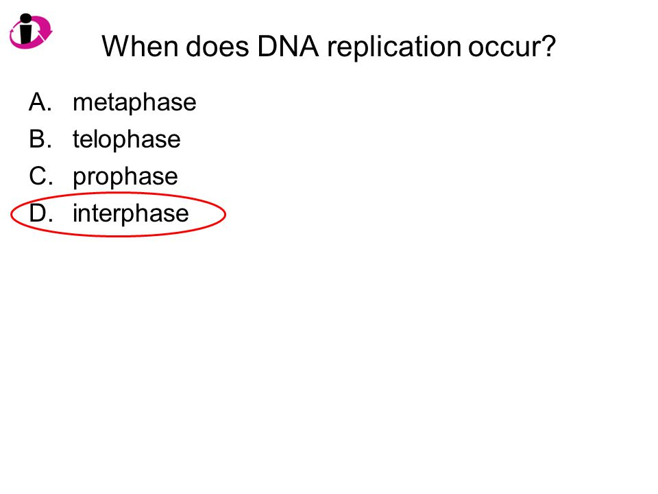 When does DNA replication occur? A.metaphase B.telophase C.prophase D.interphase