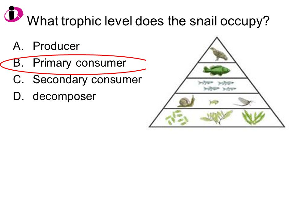 What trophic level does the snail occupy? A.Producer B.Primary consumer C.Secondary consumer D.decomposer