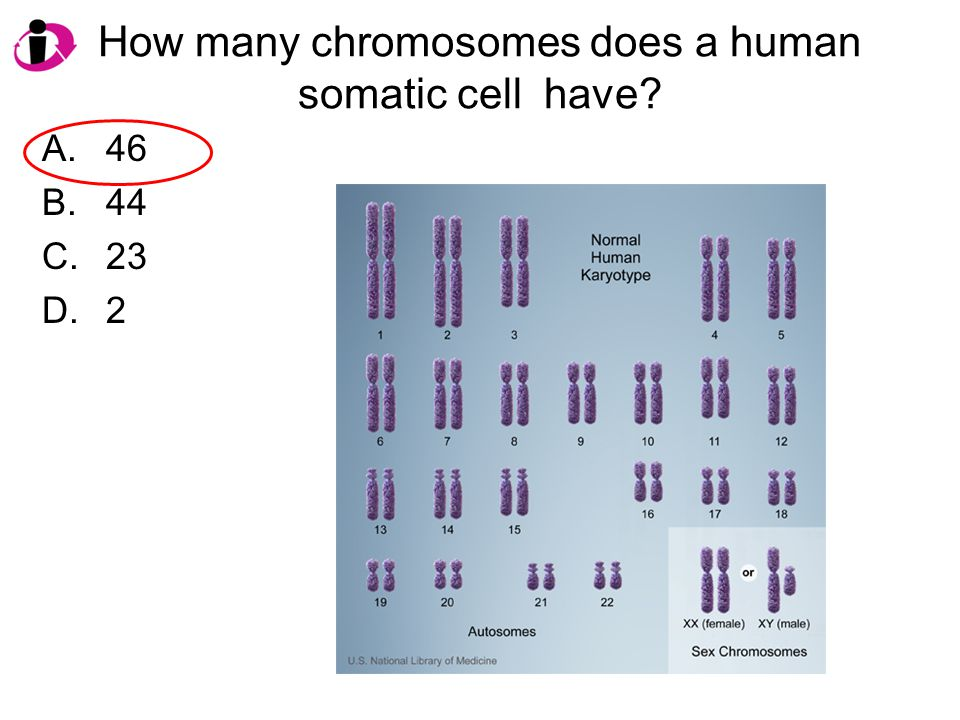 How many chromosomes does a human somatic cell have? A.46 B.44 C.23 D.2