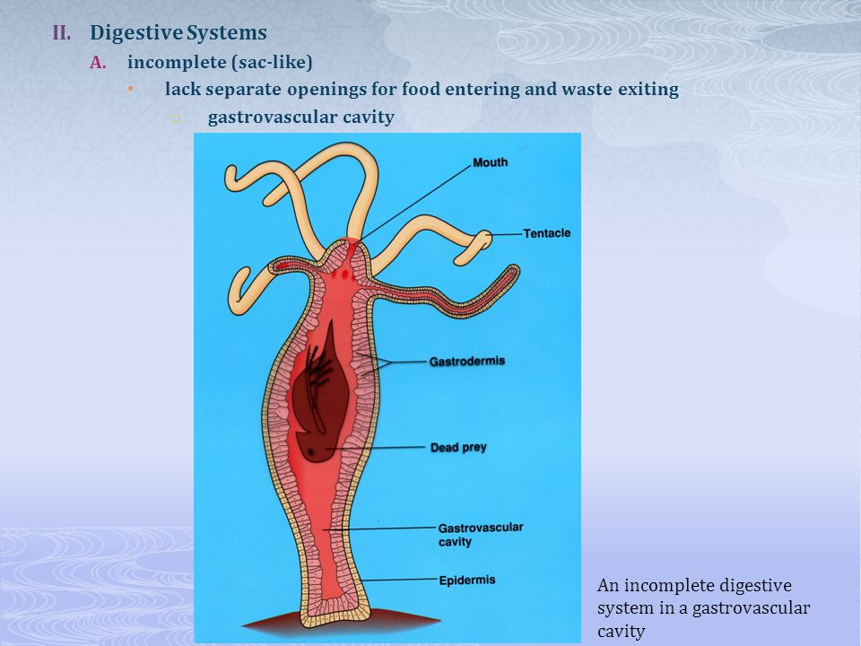 Fig. 34.5 The human digestive tract
