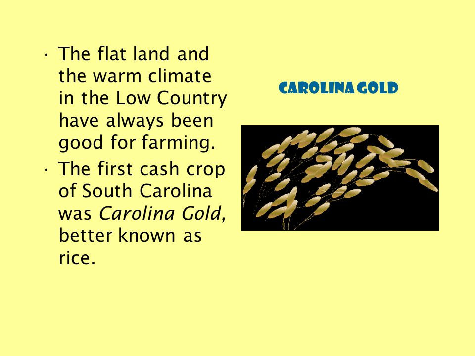 The flat land and the warm climate in the Low Country have always been good for farming.