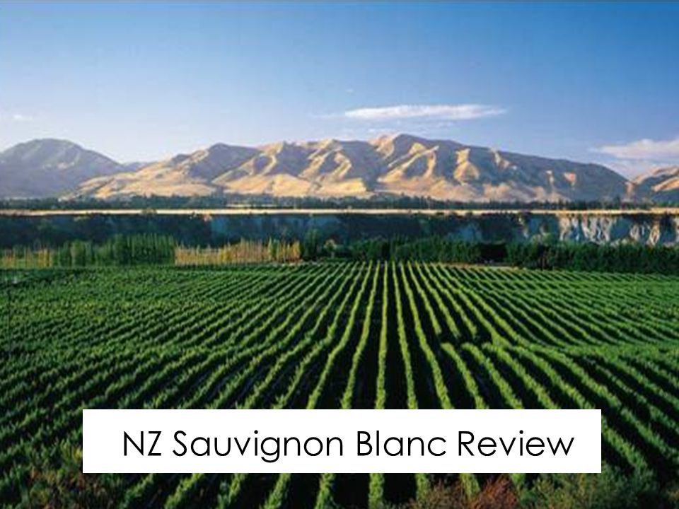 Marlborough NZ Sauvignon Blanc Review