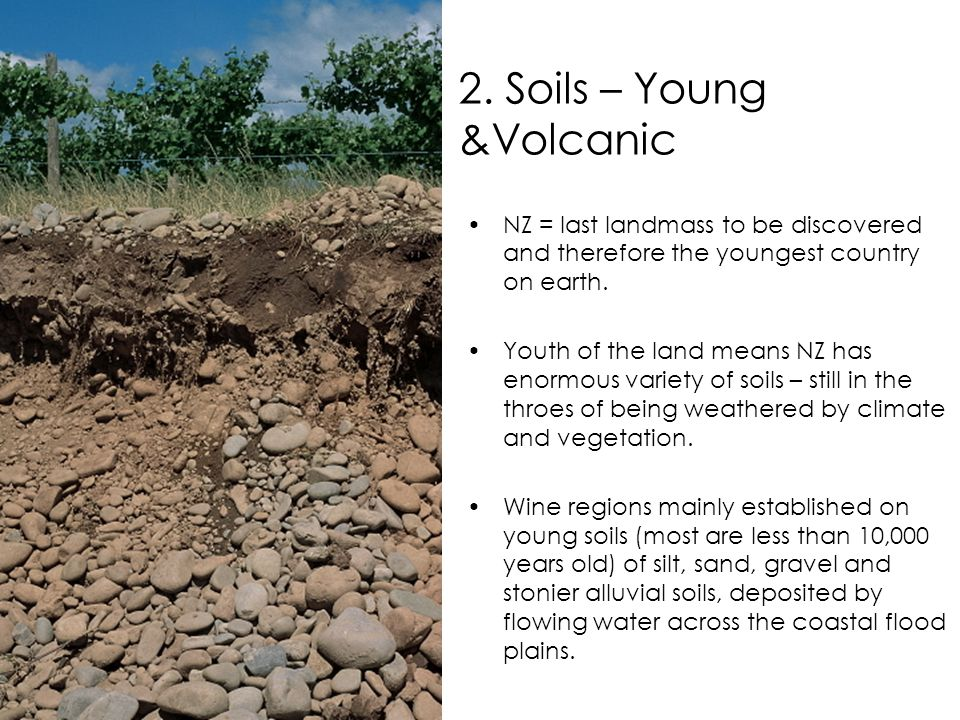 2. Soils – Young &Volcanic NZ = last landmass to be discovered and therefore the youngest country on earth. Youth of the land means NZ has enormous va