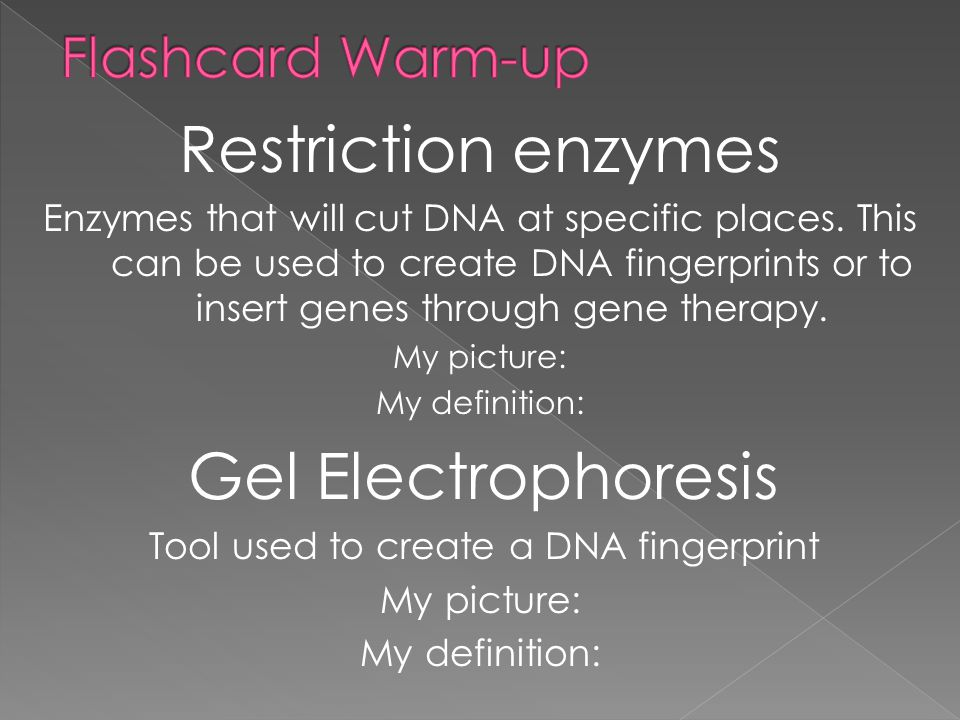 1.Why are restriction enzymes important when making a DNA fingerprint.