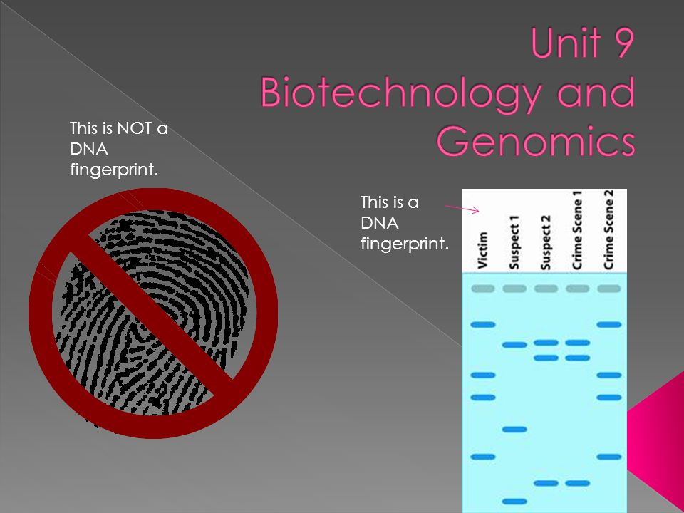 This is a DNA fingerprint. This is NOT a DNA fingerprint.