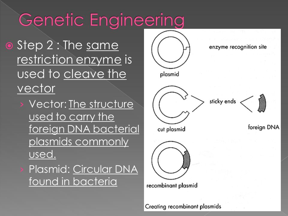  Process in creating Transgenic organism: › Step 1: Restriction enzymes cleave DNA sequence at desired gene (ex. Insulin