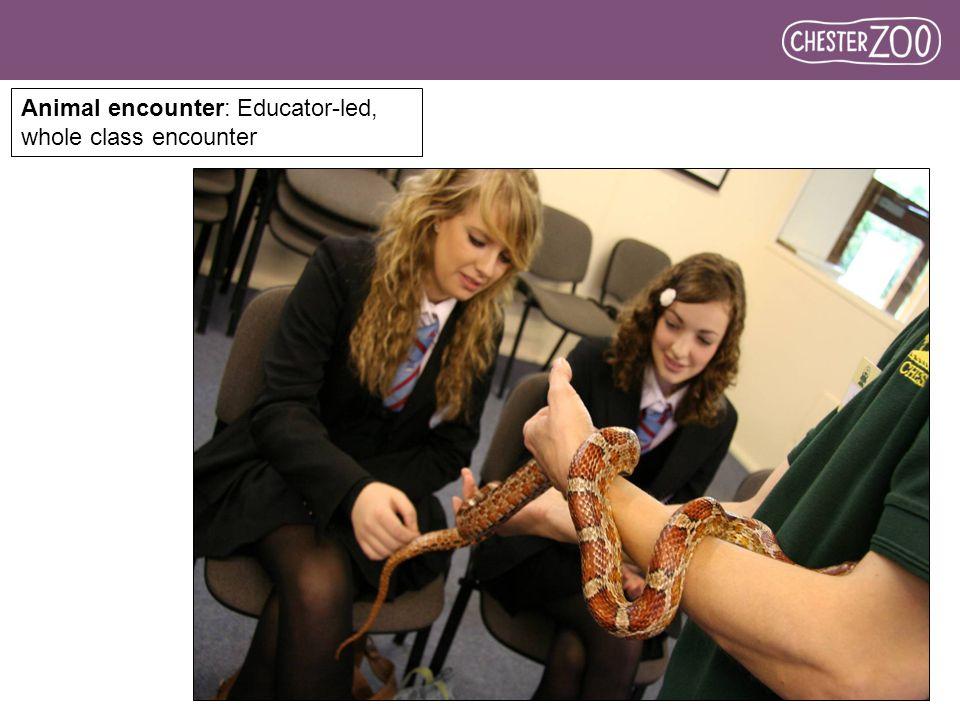 Animal encounter: Educator-led, whole class encounter