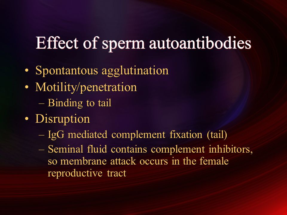 Effect of sperm autoantibodies Spontantous agglutination Motility/penetration –Binding to tail Disruption –IgG mediated complement fixation (tail) –Seminal fluid contains complement inhibitors, so membrane attack occurs in the female reproductive tract Spontantous agglutination Motility/penetration –Binding to tail Disruption –IgG mediated complement fixation (tail) –Seminal fluid contains complement inhibitors, so membrane attack occurs in the female reproductive tract