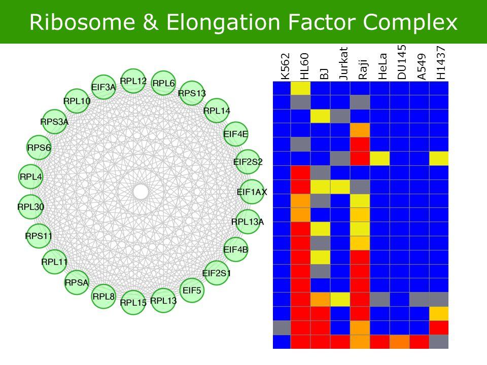 Ribosome & Elongation Factor Complex K562 HL60 BJ Jurkat Raji HeLa DU145 A549 H1437
