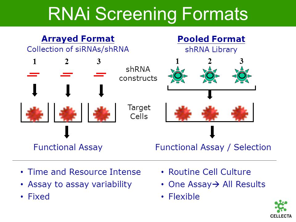 shRNA Expression Library Construction Oligo Pool Synthesis –Agilent Arrays (unique) Defined complex pools High yield long oligos Very low mutation rate Cloning –Optimized Cloning High complexity >99% representation Packaging –Optimized Large Scale Maintain representation High Titer